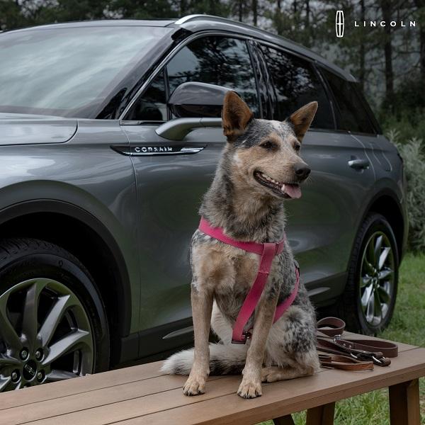 Lincoln_Dia internacional del perro 1
